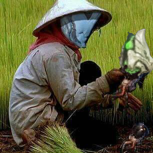 plague_star_farm.png