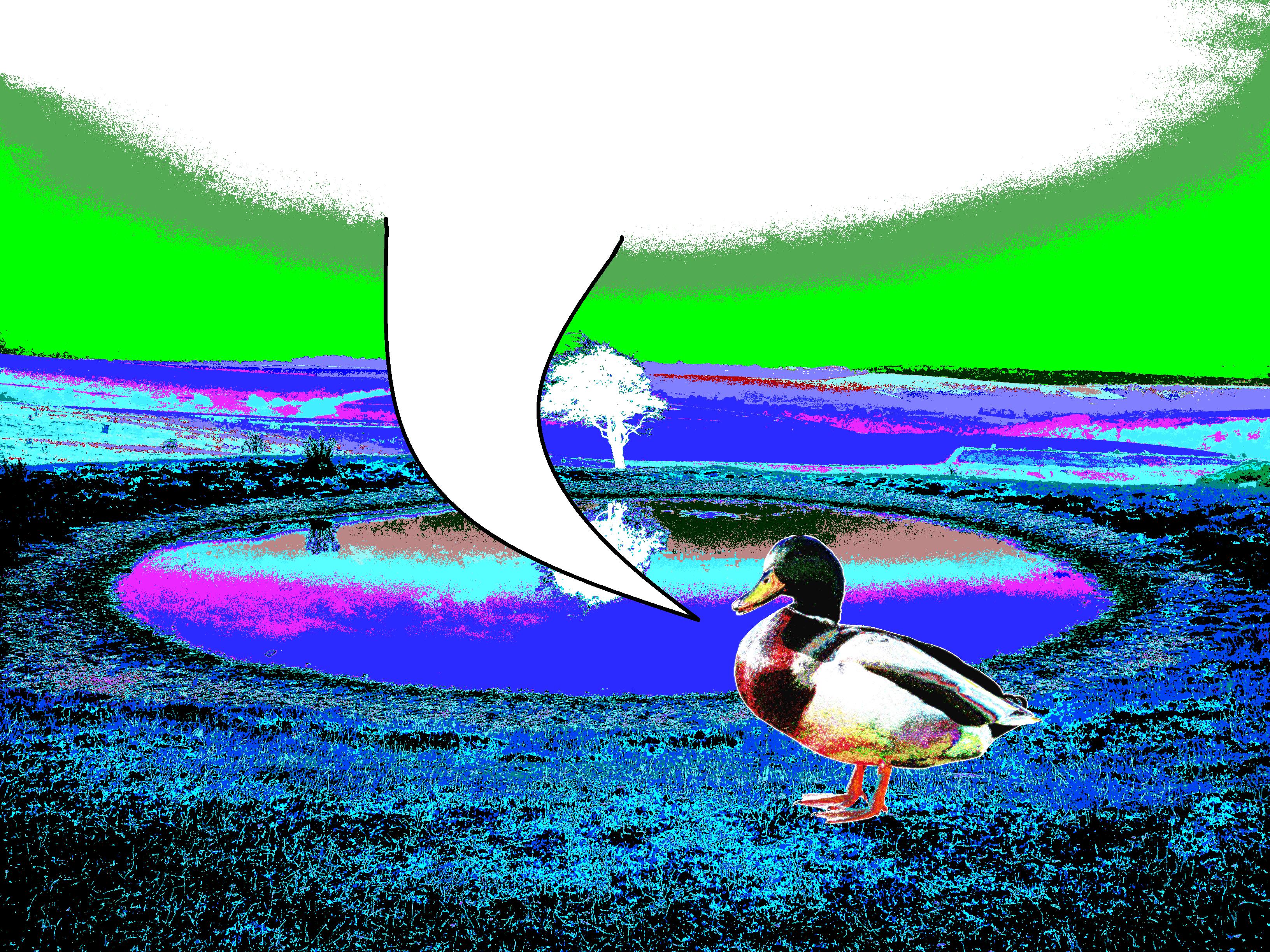 [Image: duckkk.png]
