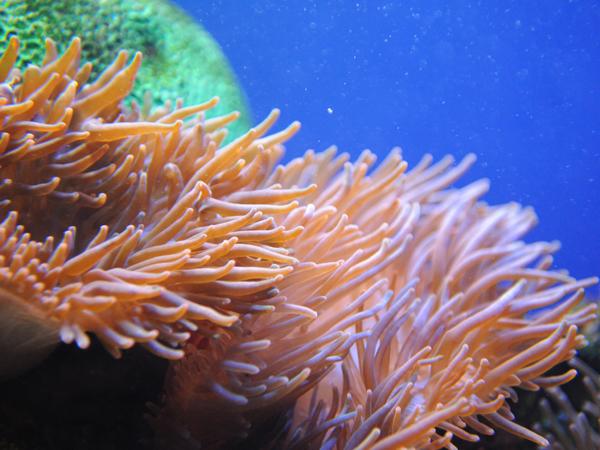 https://cdn.discordapp.com/attachments/248574297235390466/585813638875447306/sea-anemone-new-600.png