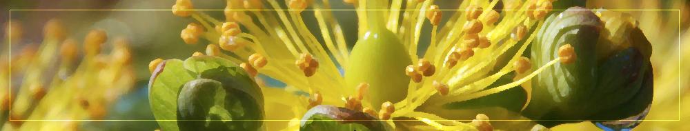 sig_gardener_copy.PNG