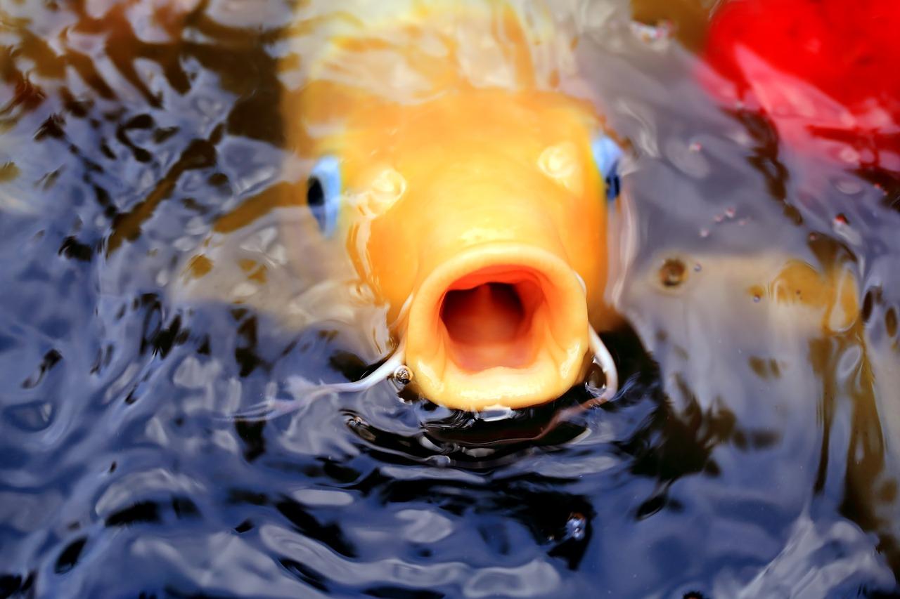 fish-1059268_1280.jpg
