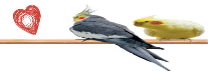 [Image: Two_Birds.png]
