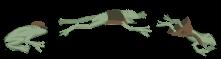 Divider_frog_smol.png