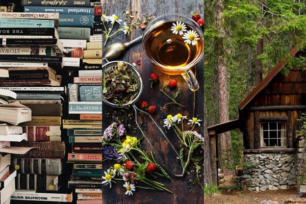woods_cozy_books.png