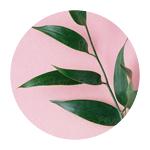 rosaplanta.png