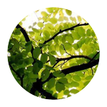 verdesofia.png