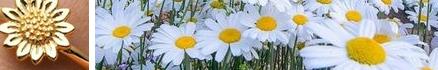 Flower_field_1.png