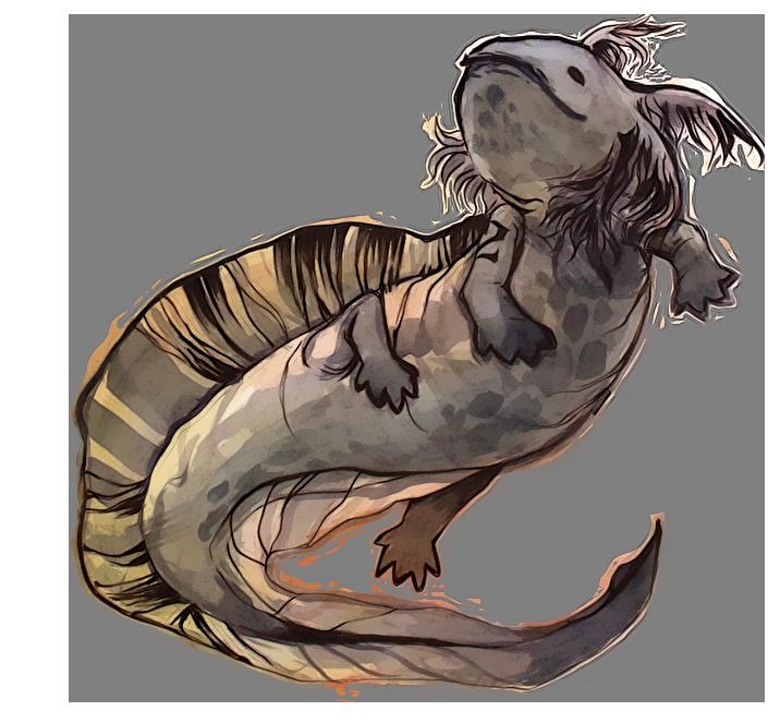Je préfère le terme de fripon. [Solo] Salamandre