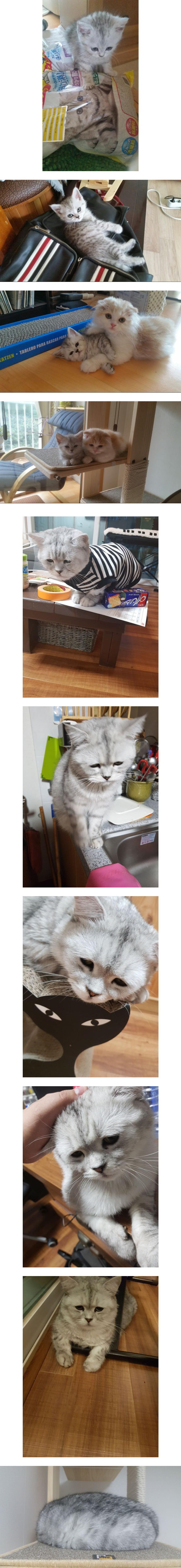 성장한 고양이