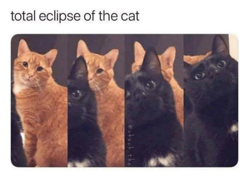 total-eclipse-of-the-cat-32358218.png