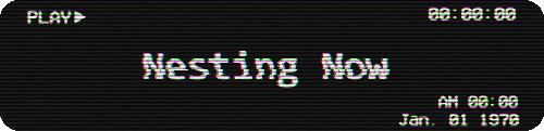 nestingnow.png