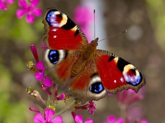 [Bild: Schmetterling.jpg]