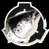 logo-saumon.png