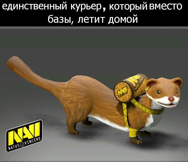 Котожук!