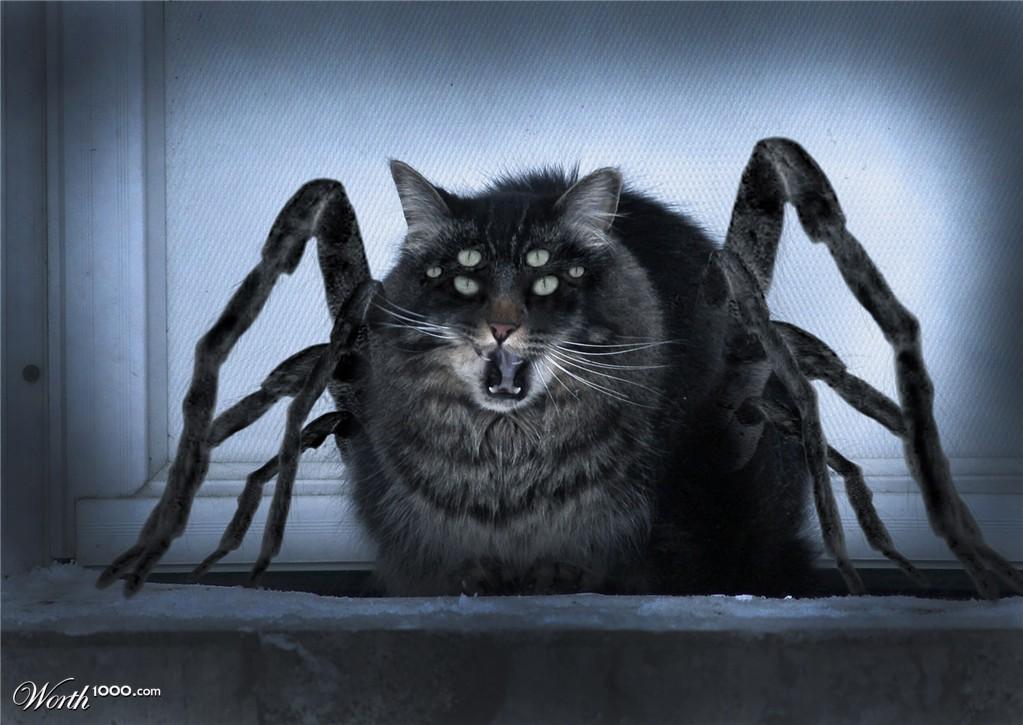 Spidercatspidercatdoeswhateveraspidercat