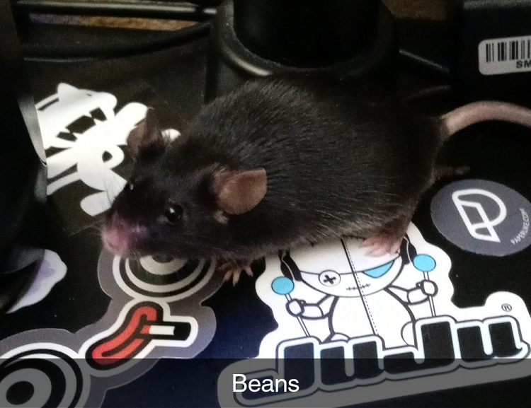 Meet Beans and I <3 Small_beans