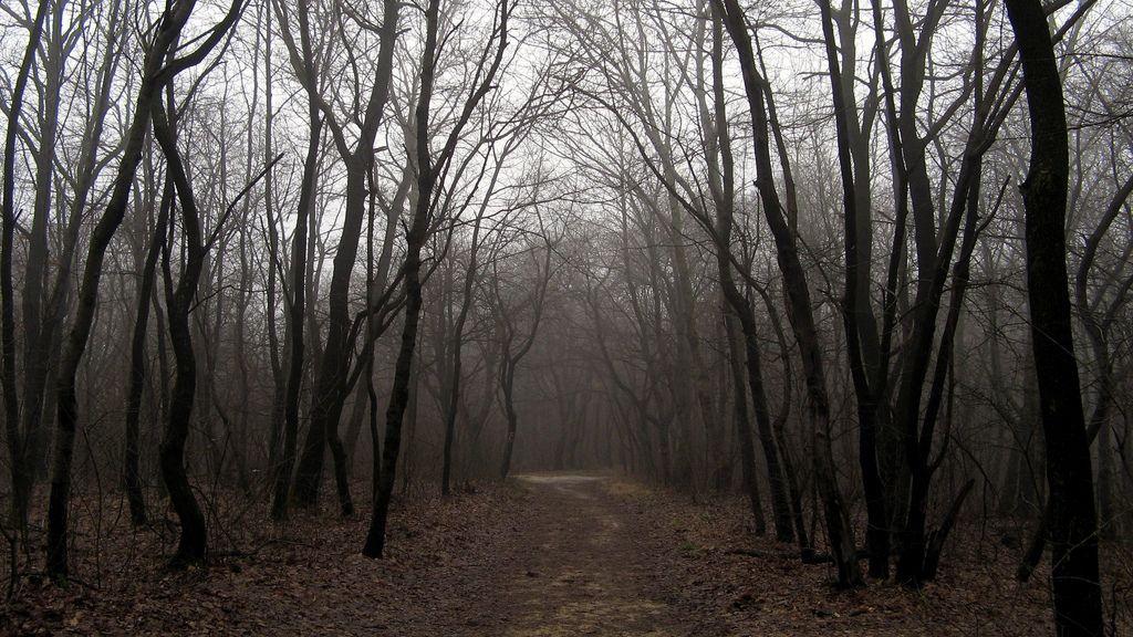 Orfanato Blackwood Floresta_-_entrada
