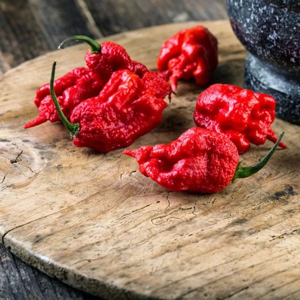 [Image: carolina-reaper-2-hot-pepper-pepper-joes_grande.png]
