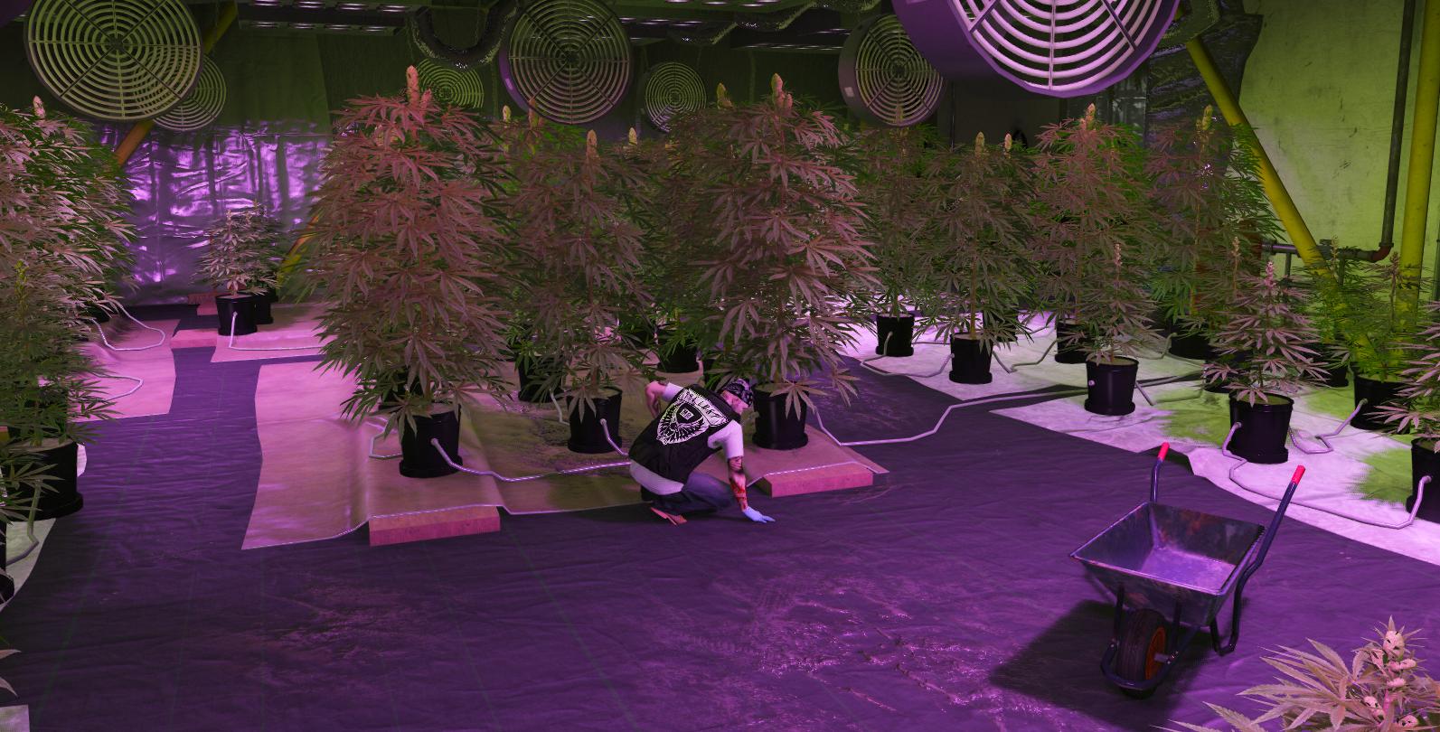 weed_sc.png