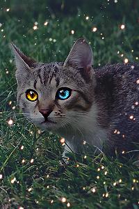 Lynxpaw,