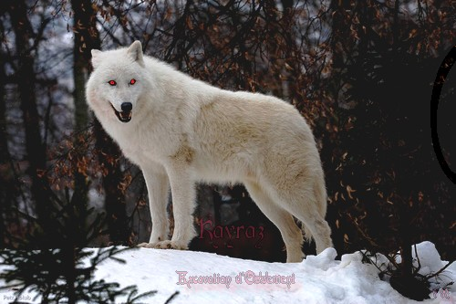 L'Avènement du Cauchemar White_wolf_by_tygrik_d2jllq6-fullview