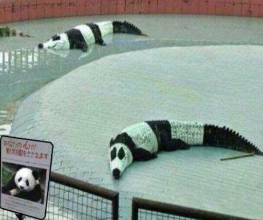 pandacroc.jpg