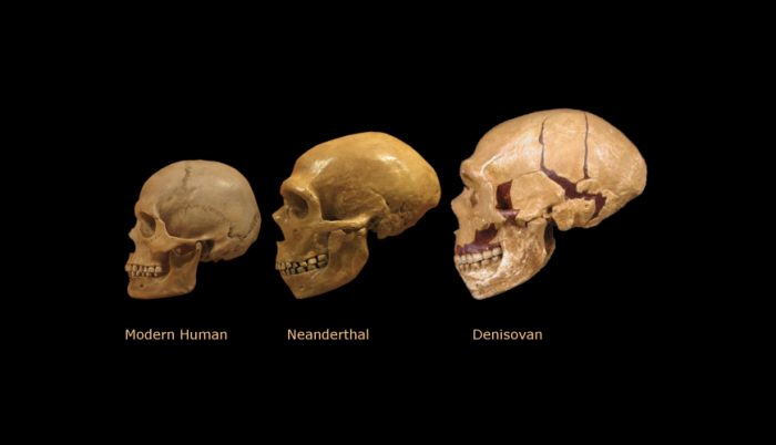 [Image: who-are-the-denisovans-and-how-does-thei...00x402.png]