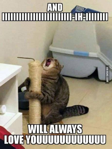 cat-and-will-always-love-youuuuuuuuuuuu-via-9gagcom.jpeg