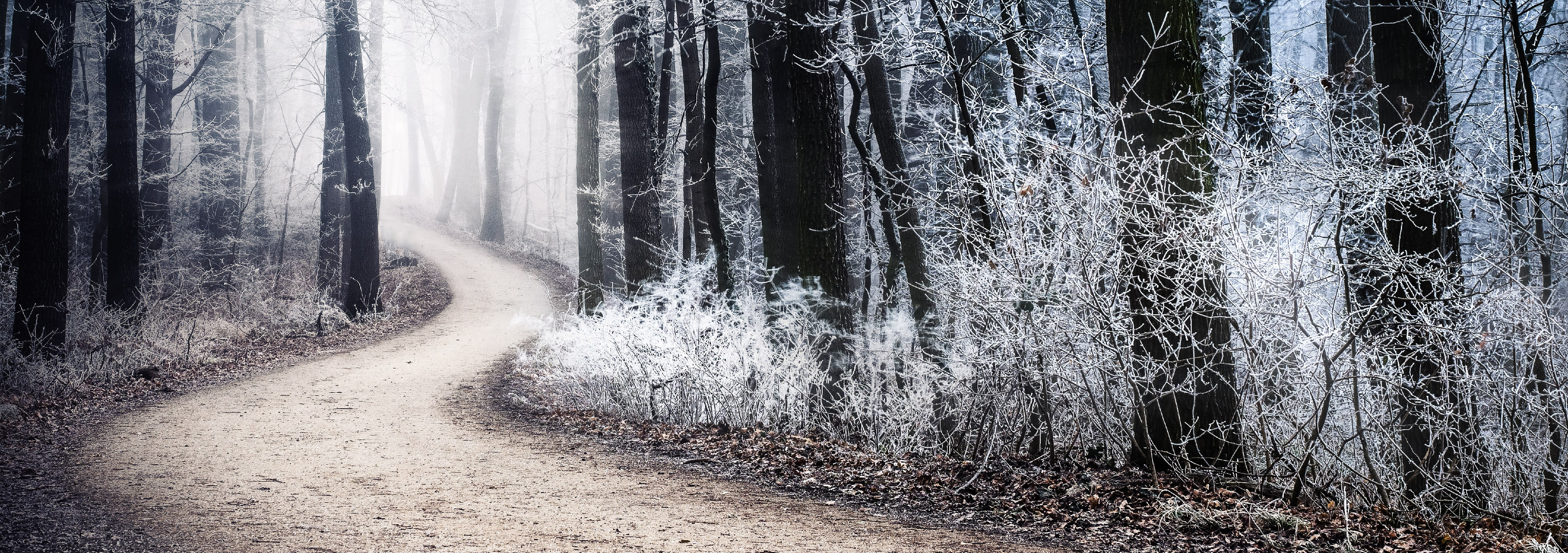 [Image: winter22.jpg]