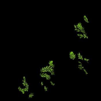 fern_queen350.png