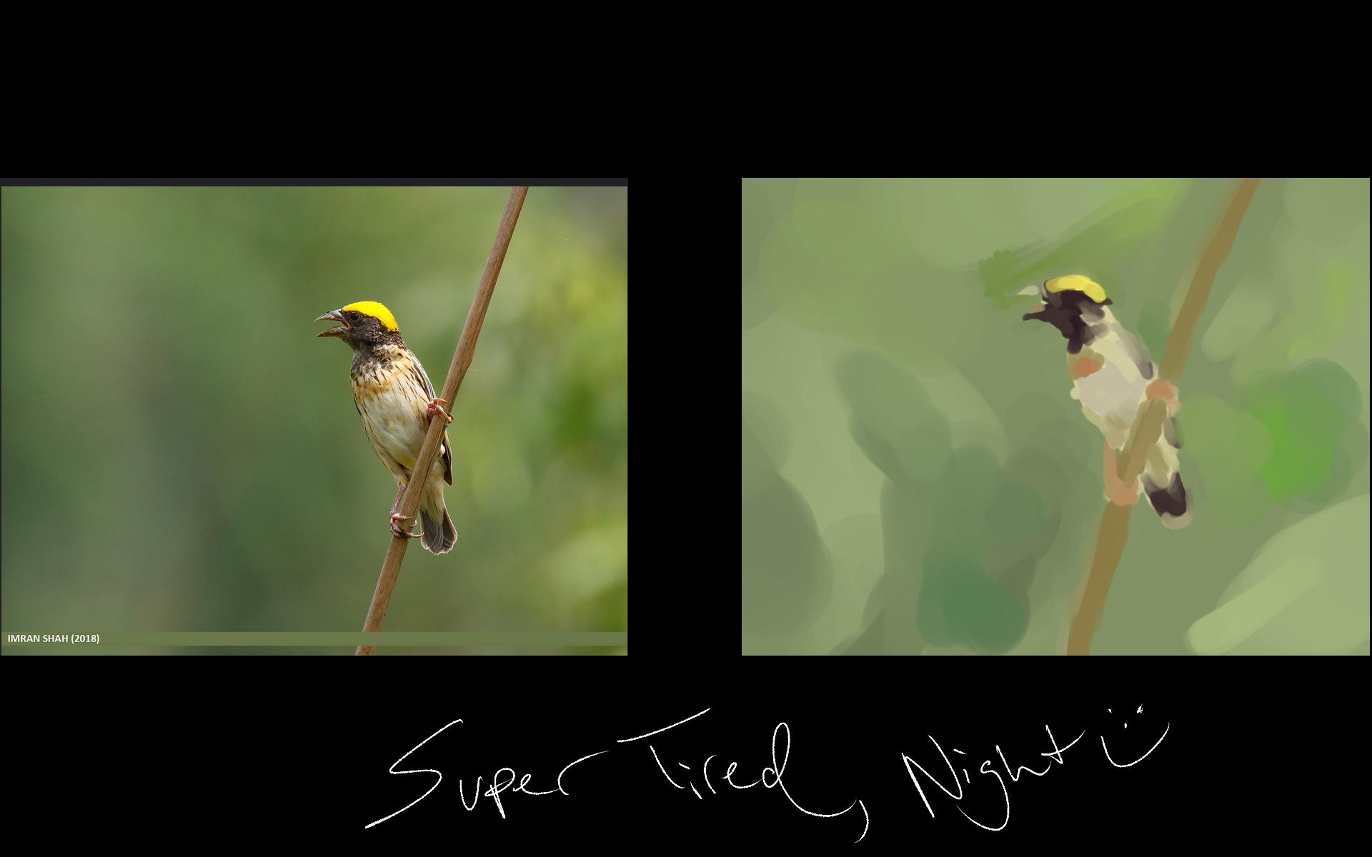 [Image: bird_study.png]