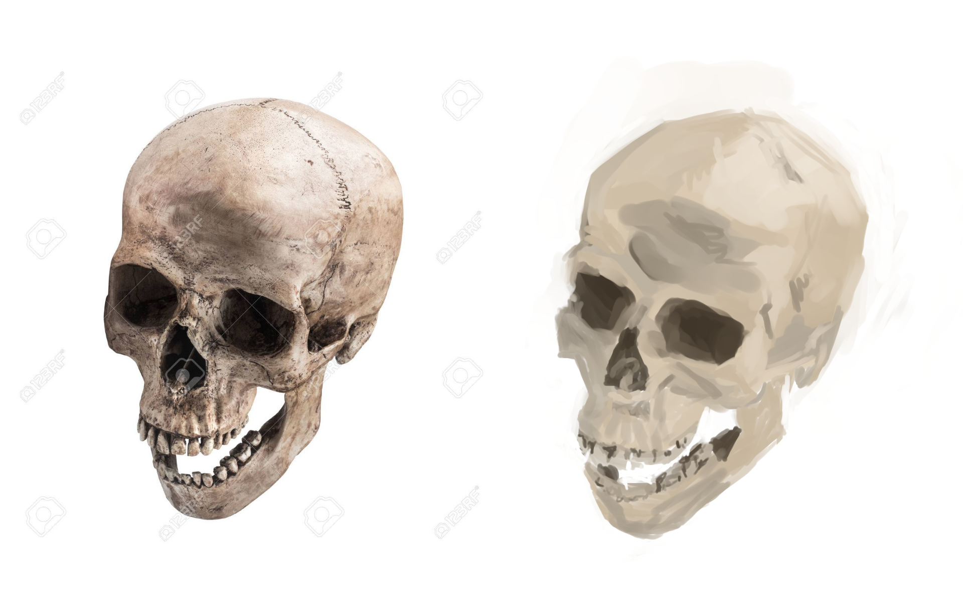 [Image: skullstudy1.png]