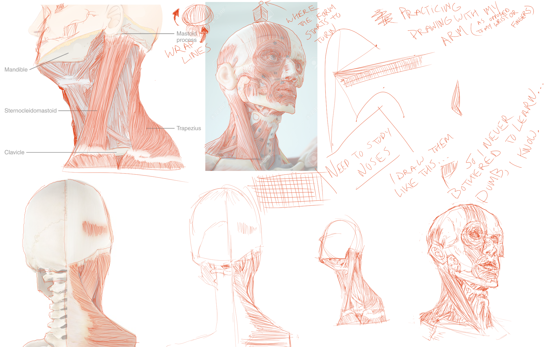 [Image: face_neck_anatomy1.png]