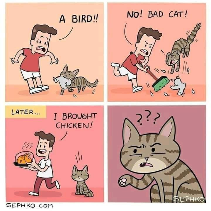 cat-bird3-jpg.png