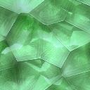 Original Texture