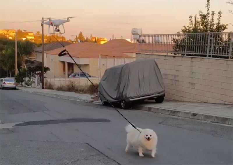 강아지 산책시키기