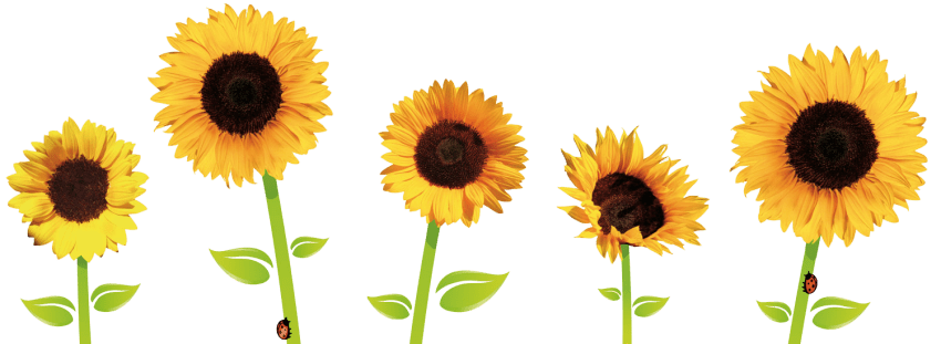 [Image: sunflowers-png-3.png]