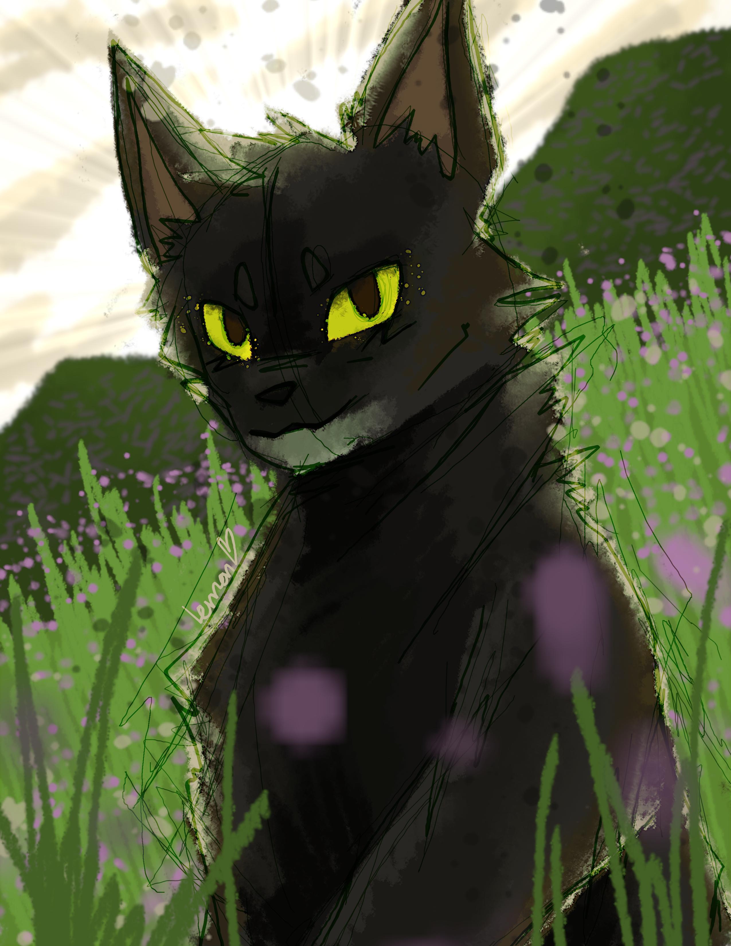 rhindon's cats Raven