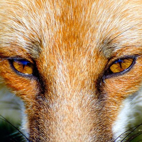 foxeyes.jpg