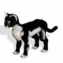 Gato negro Gato_negro