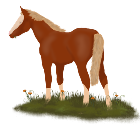 Berry's Foal by Timo Townsend/ Ecladhreth