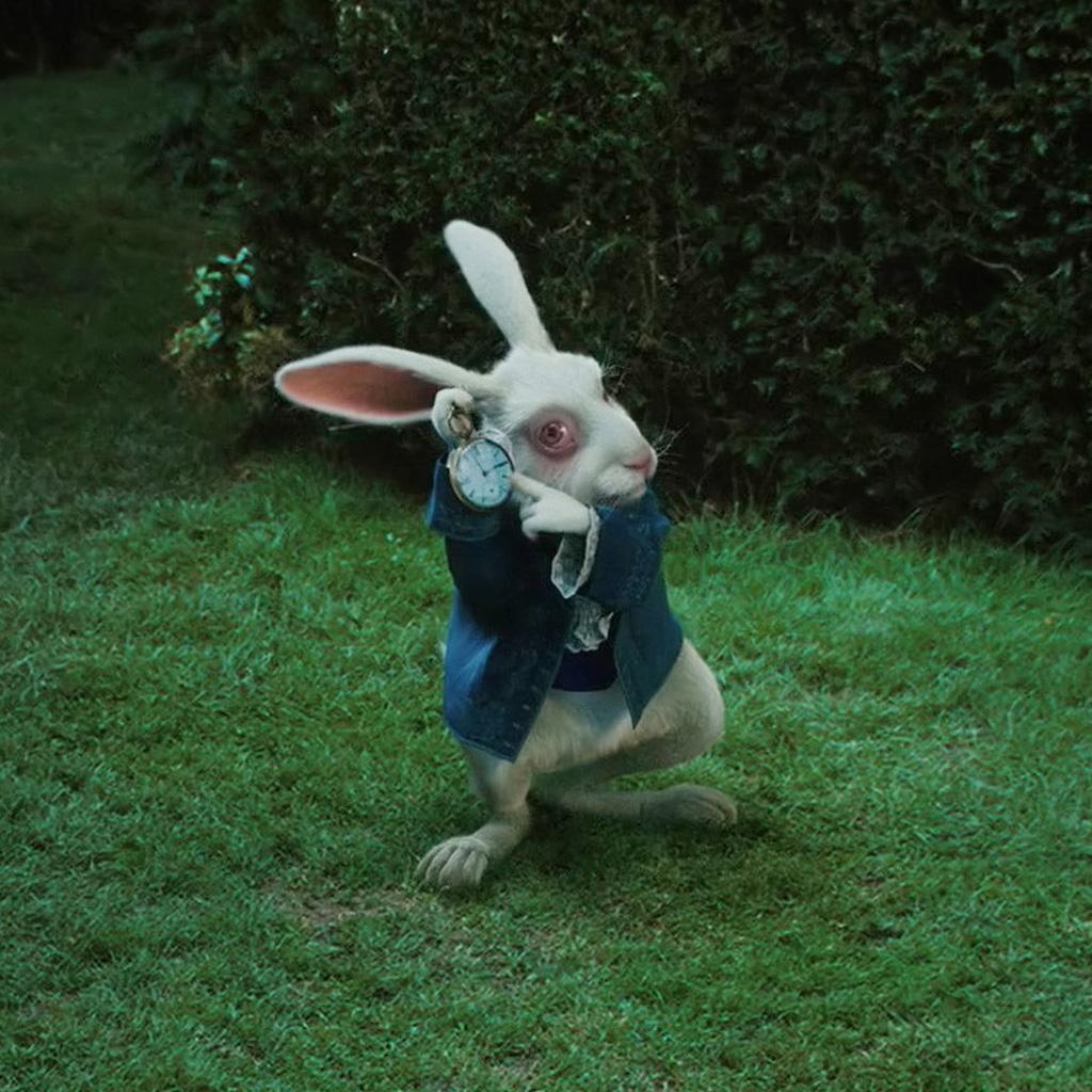 https://cdn.discordapp.com/attachments/627030086964740096/796953372988669962/white-rabbit-watch-ipad-wallpaper-1024x1024.jpg
