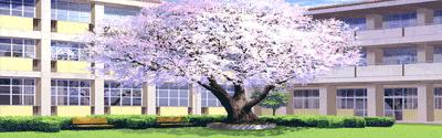 Le collège Shirayuri