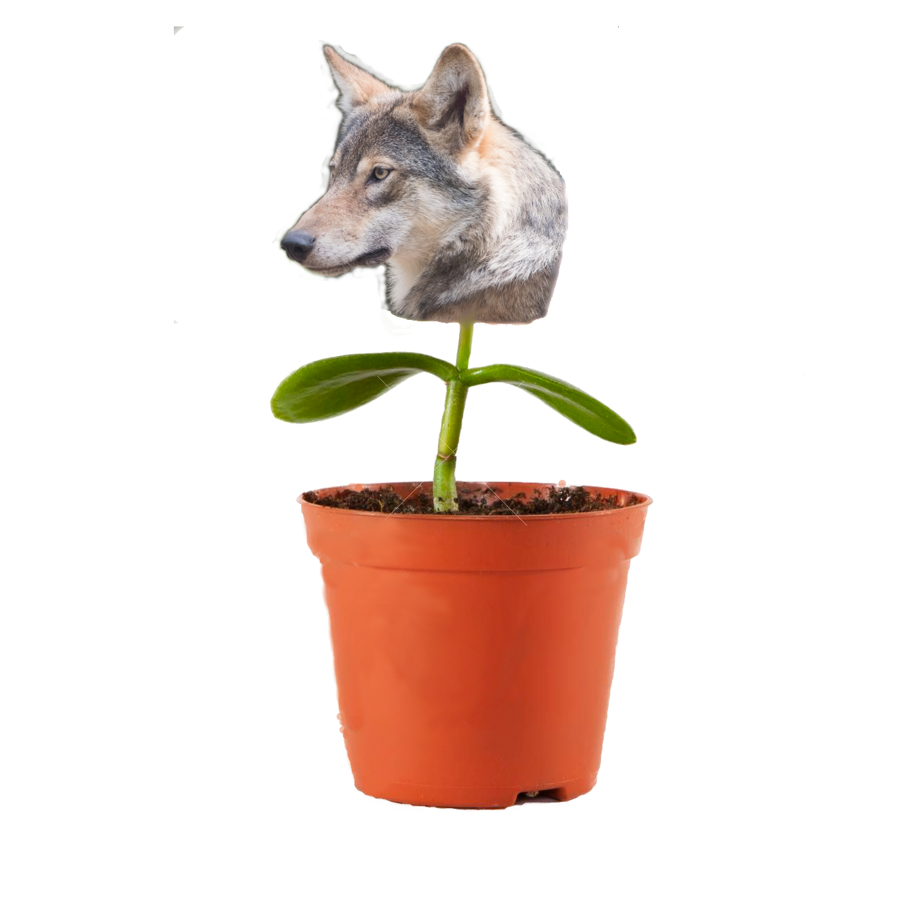 [Image: plantywoof.png]