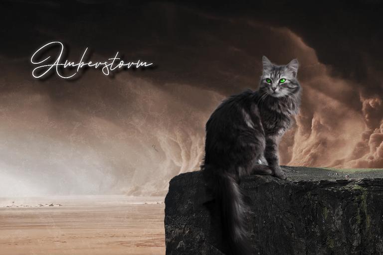 Bekijkt profiel - Amberstorm Amberstorm
