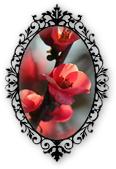 https://cdn.discordapp.com/attachments/743121347219161199/843975297891958804/bbcode2.0alfea.png