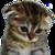 :sadcat: