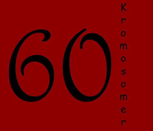 60 kromosomer