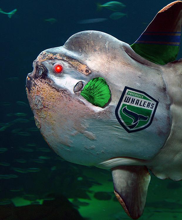 [Image: robot-sunfish.png]