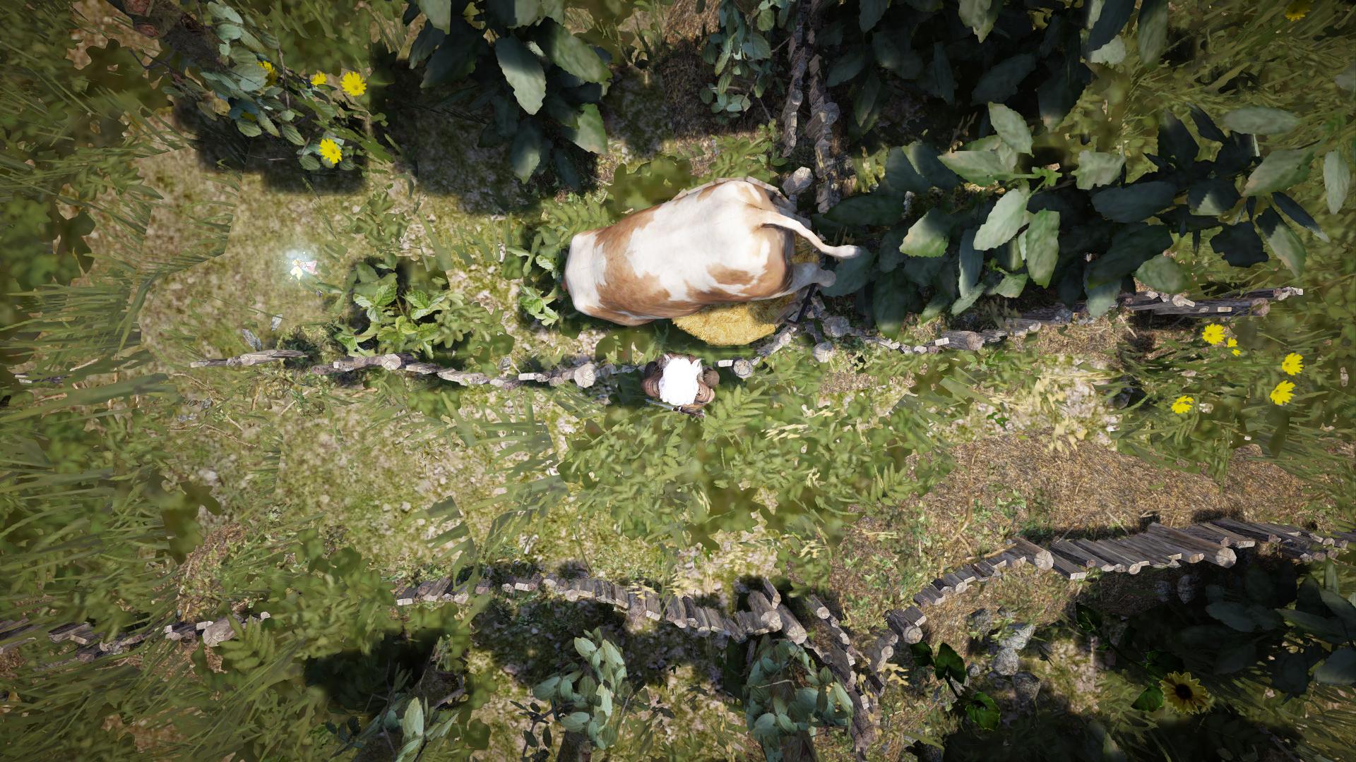 埋了自己的牛